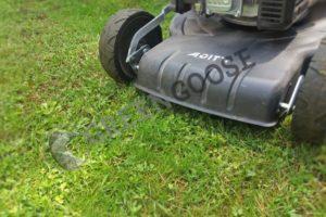 С середины мая до конца июня трава интенсивно растет, поэтому подрезать ее нужно регулярно - в среднем один раз в неделю . Однако не следует делать это так часто во время засухи .