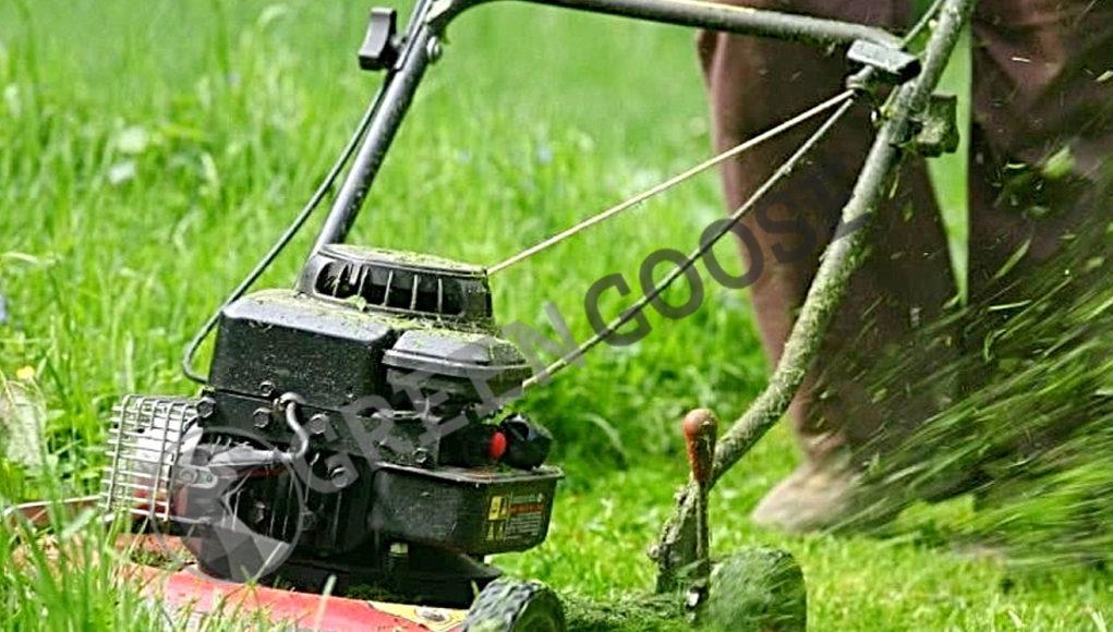 Регулярное кошение способствует росту и размножению травы и ограничивает развитие сорняков (они чувствительны к низкому покосу).