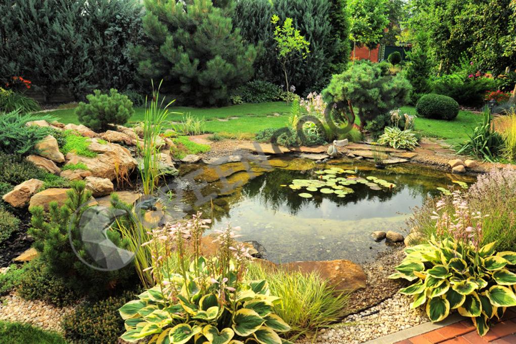 Пруд в небольшом саду - это не только декоративно. Сияющая поверхность воды отражает небо и растения вокруг него, делая сад оптически больше.