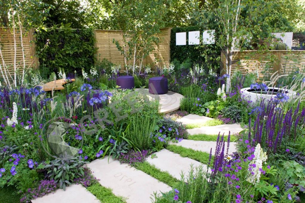 Яркая каменная дорожка ведет через клумбы, засаженные прохладными растениями. Белые и синие цветы оптически увеличивают пространство. Дополнительный белый акцент - белые стволы берез.