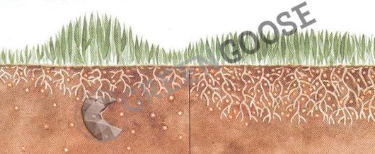 Влияние медленно растворяющихся удобрений на рост травы