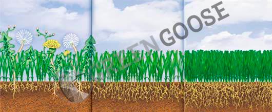 Состояние травы зависит от используемого удобрения.